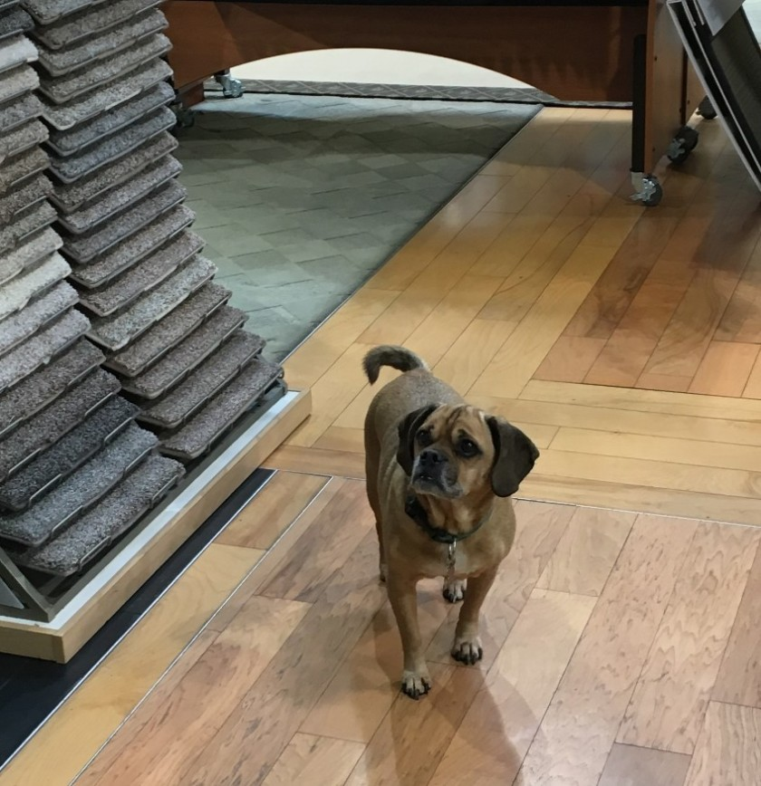 Mugsy visits the showroom