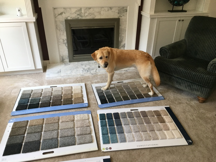 Pup chooses his favorite carpet